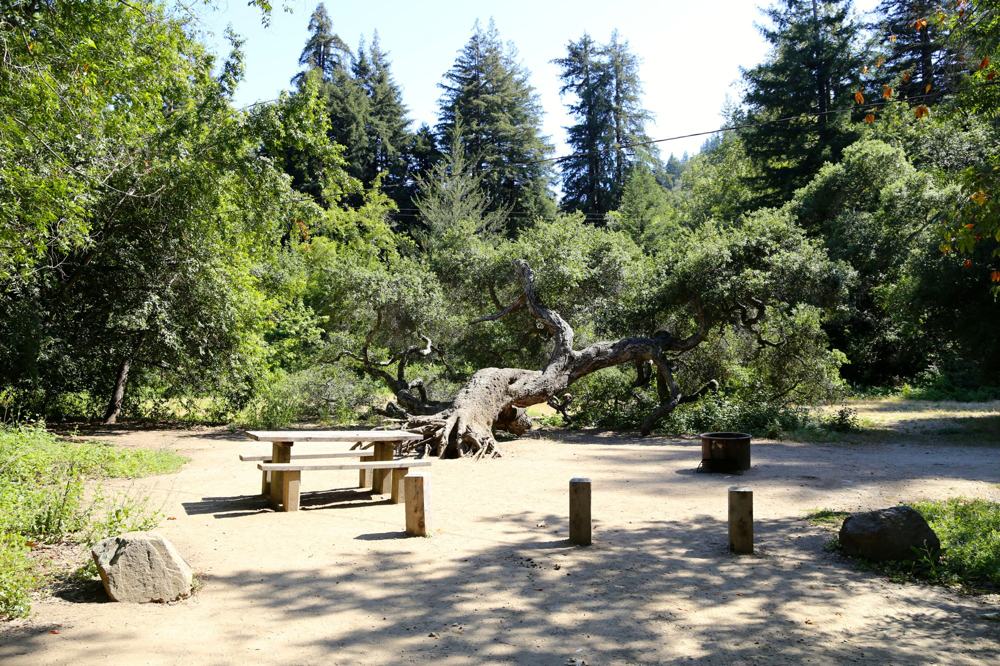 Pfeiffer big sur state park campground news from tripsicor for Big sur national park cabins